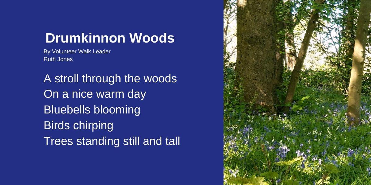 Drumkinnon Woods by Volunteer Walk Leader Ruth Jones